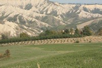 minoccheri