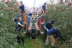 carro raccolta frutta
