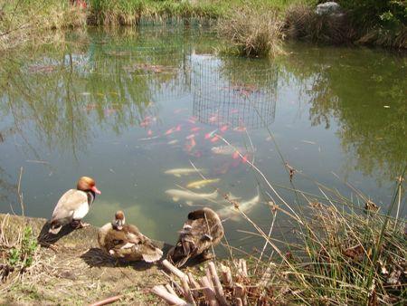 aree umide biodiversità